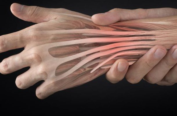 extensor-tendons-of-the-hand